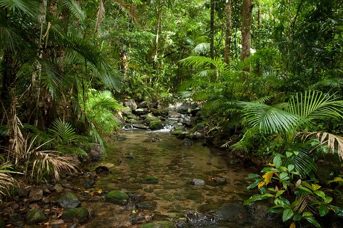 Cairns Reef and Rainforest Combo: Daintree Rainforest and the Great Barrier Reef