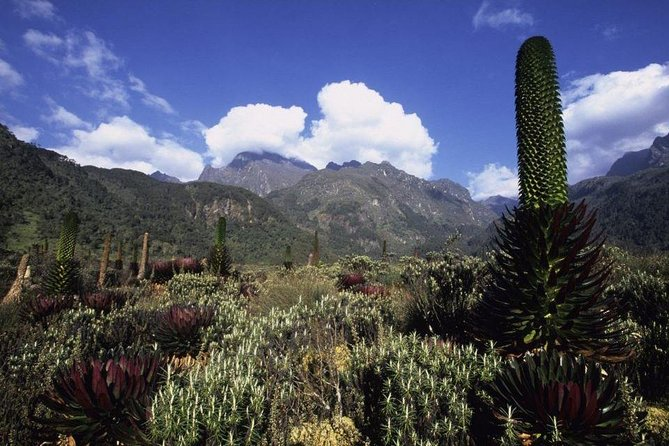 7 Days Rwenzori Mountains Hike to Margherita