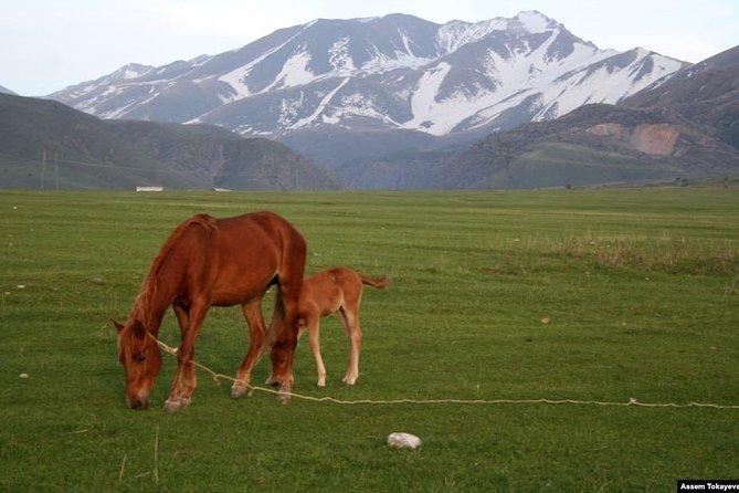 Trekking in Aksu-Zhabagly nature reserve (2 days)