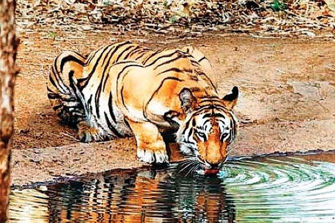 Private Day Trip to Sariska National Park (Tiger Safari) From Jaipur