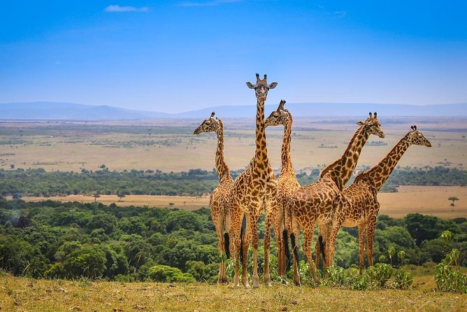 4Days 3Nights Lake Naivasha &Maasai Mara Package