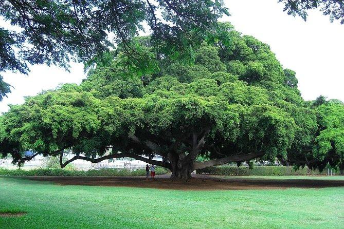 Lalbagh Botanical Garden Walking Tour in Bangalore