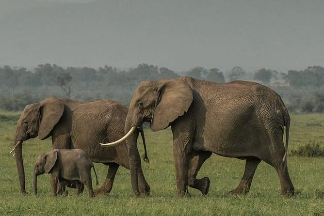 4 Days Masai Mara/Lake Nakuru budget safari