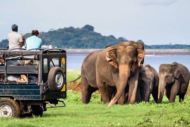 Wildlife Sri Lanka Tour 10 Days