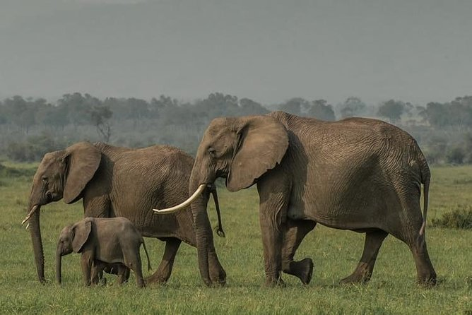 5 Days Budget Safari in Kenya