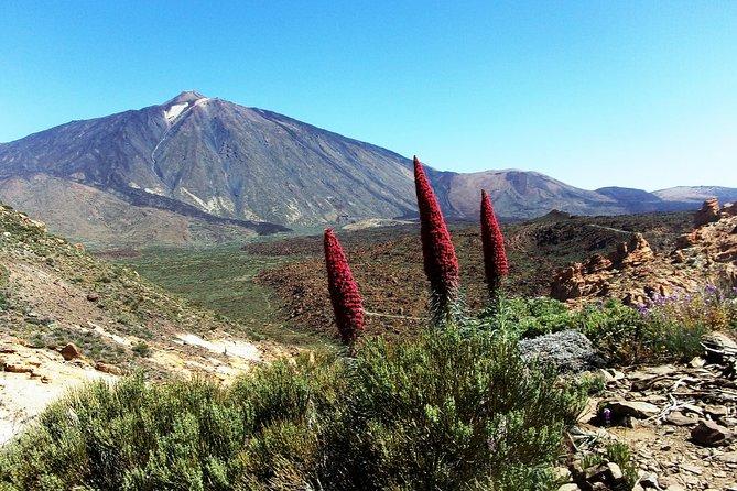 The Tajinaste Trail