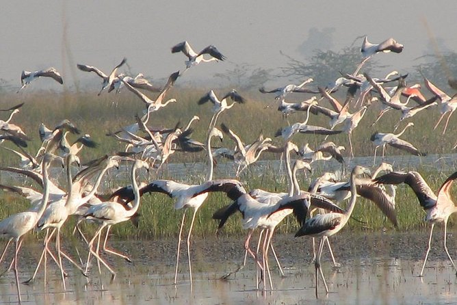 North India Birding Tour photo 4