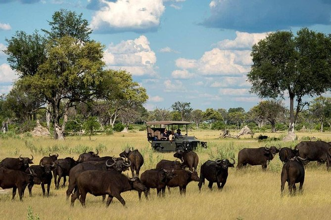 2 Days Hwange National Park from Victoria Falls photo 3