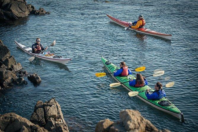 3-Hour Sea Kayak Tour in the San Juan Islands