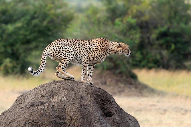 Maasai Mara - 3 Day Safari Tour