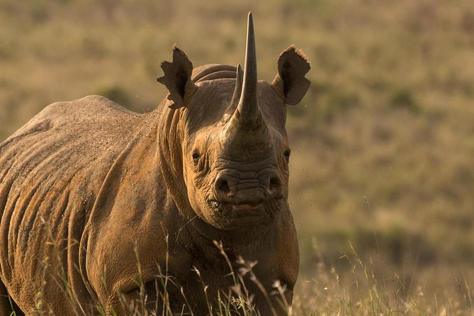 Ol Pejeta to Samburu - 4 Day Safari Tour