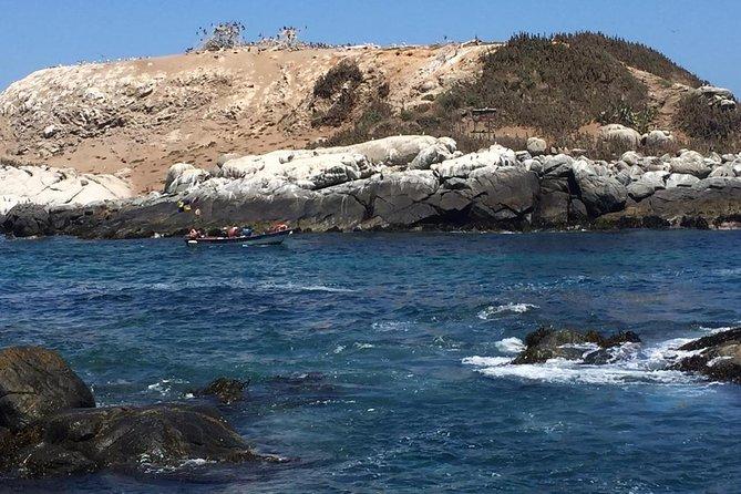 WalkingTour Zapallar-Cachagua HumboldtPenguins From Valparaiso PRIVATE EXCURSION
