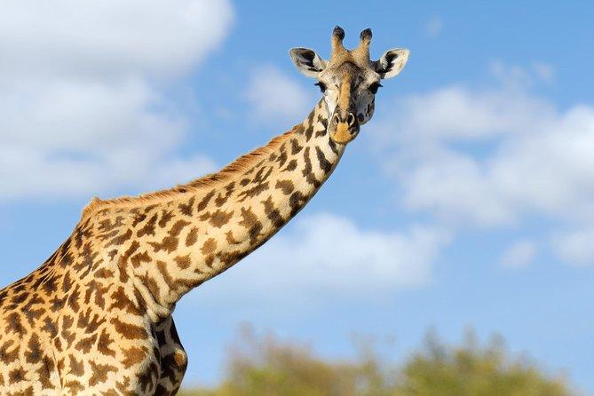 Mt. Kenya, Meru and Samburu - 6 Day Safari Tour