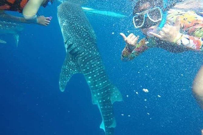 Oslob Whaleshark Watching and Canyoneering Day Tour photo 2