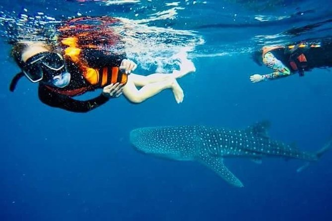 Oslob Whaleshark Watching and Canyoneering Day Tour photo 4