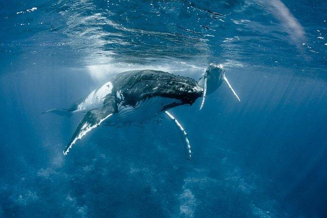 Observação de baleias Bora Bora
