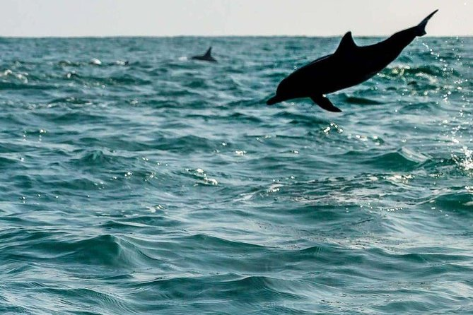 Dolphin and Whale Watching Excursion in Kalpitiya