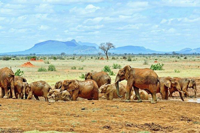 4-DAY Exciting Tsavo & Amboseli National Park/Mt. Kilimanjaro Safari