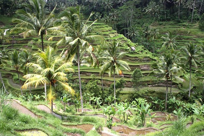 Bali Car Charter - Ubud and Tanah Lot Temple Tour