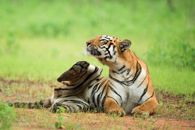 2-Night Private Ranthambore National Park with Wildlife Tour from Delhi