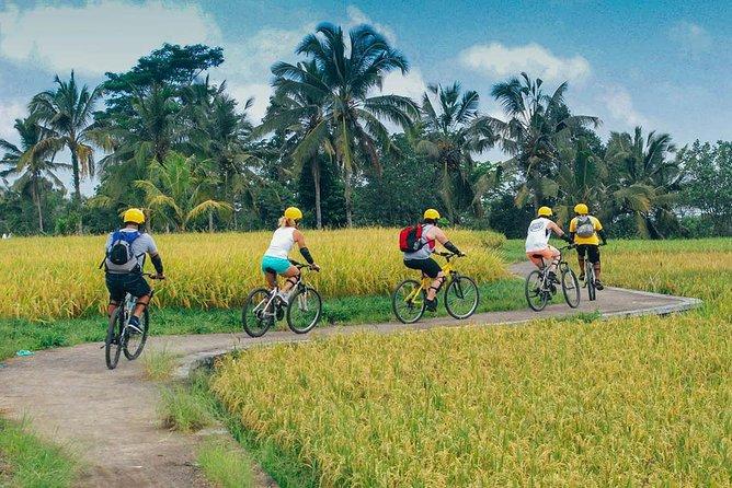 Bali Cycling and Bali Swing Experience