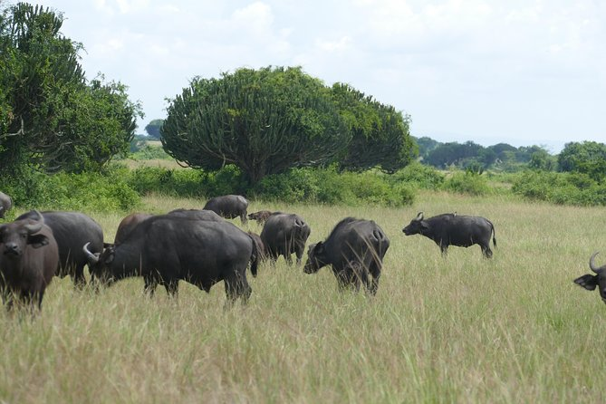 3 Days Ultimate Wildlife, boat cruise experience in Murchison Falls NP photo 3