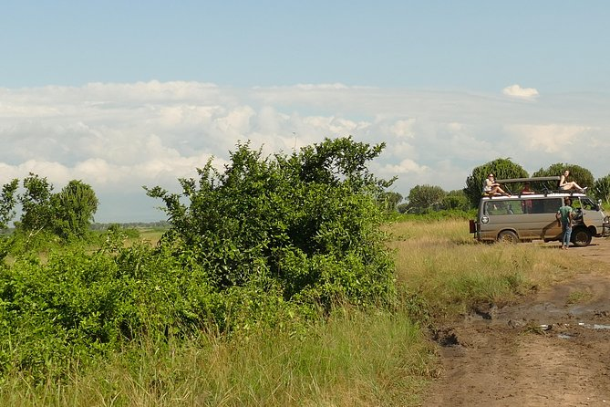 3 Days Ultimate Wildlife, boat cruise experience in Murchison Falls NP photo 13