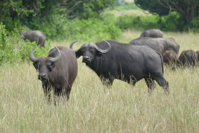 3 Days Ultimate Wildlife, boat cruise experience in Murchison Falls NP photo 11