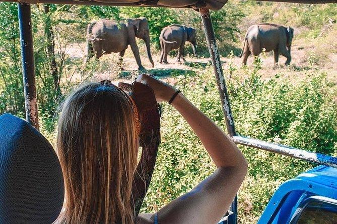 Jeep Safari in Minneriya National Park