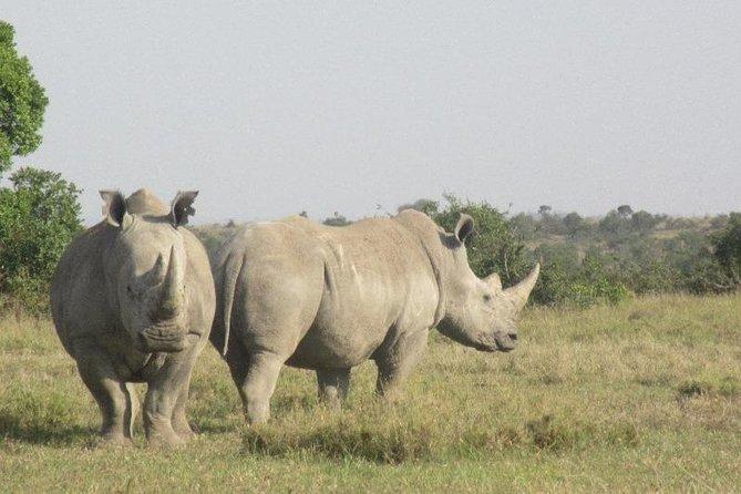 Olpejeta Rhinos
