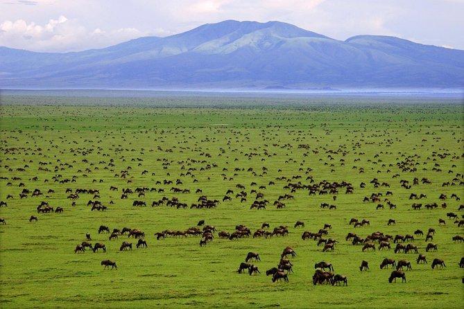 3 Days Migration Safari in the Serengeti and Ngorongoro