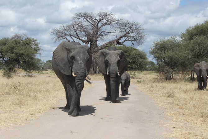4 Days Tanzania Camping Safari (Tarangire ,Serengeti and More)