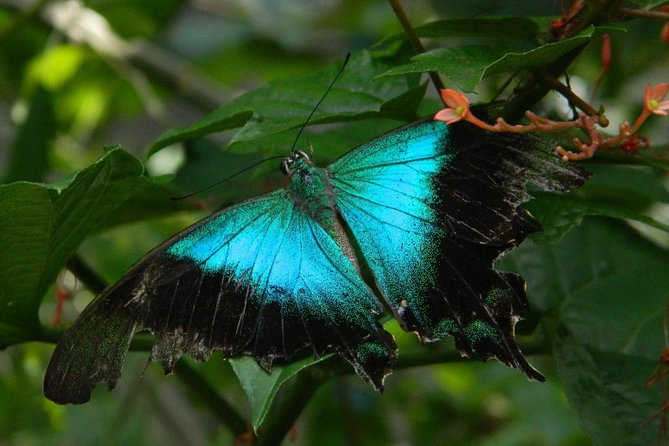 Discover Wildlife Butterfly Park & Insect Kingdom