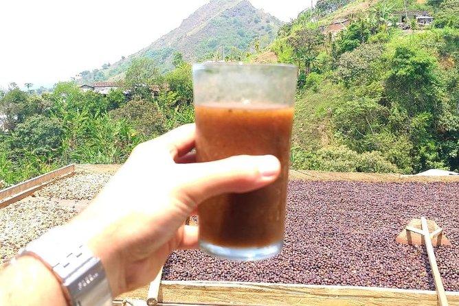 Coffee tour Medellin