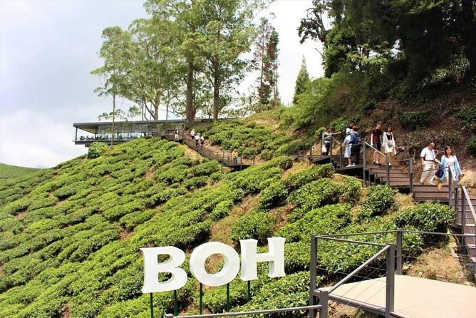 ONE DAY PRIVATE TOUR – Cameron Highland & Hulu Tamu Hot Spring, Lunch included photo 1