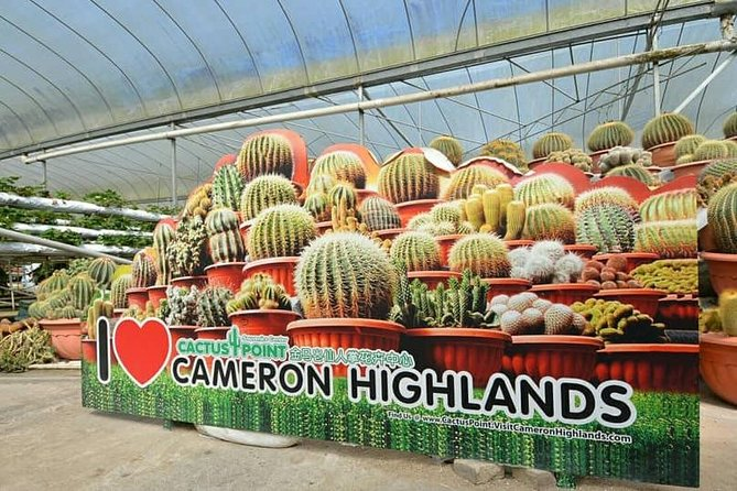 ONE DAY PRIVATE TOUR – Cameron Highland & Hulu Tamu Hot Spring, Lunch included photo 2
