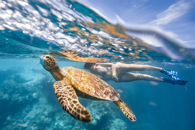 Cook Islands Turtle Tour