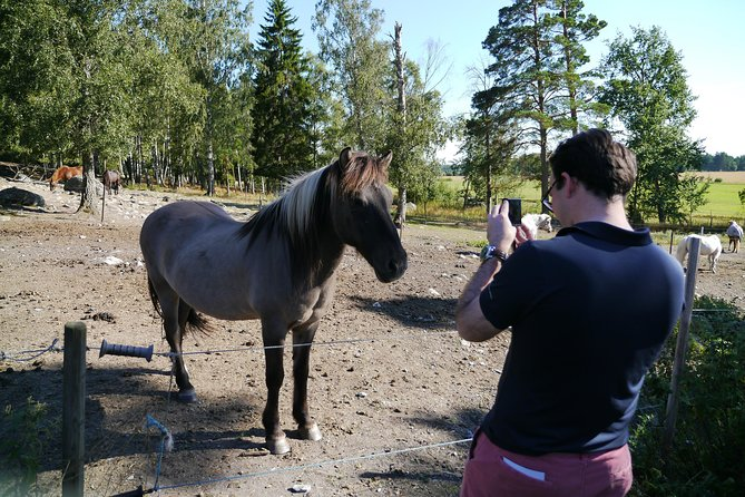 Husbyöhns Icelandic horse farm visit