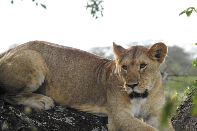 2Days Short Safaris - Lake Manyara or Tarangire and Ngorongoro Crater