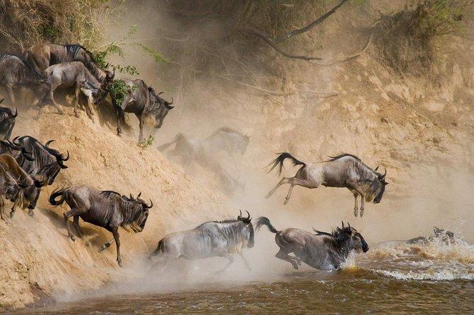 4 DAYS Lodge Safaris: Lake Manyara or Tarangire - Serengeti - Ngorongoro Crater