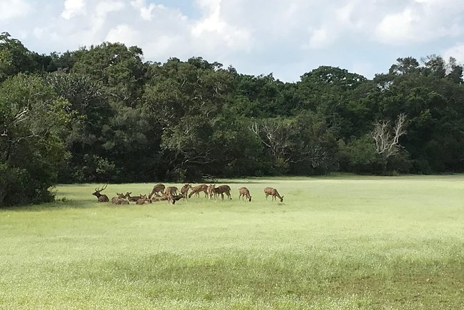Safari at Wilpattu National Park from Negombo (All inclusive day tour) photo 3