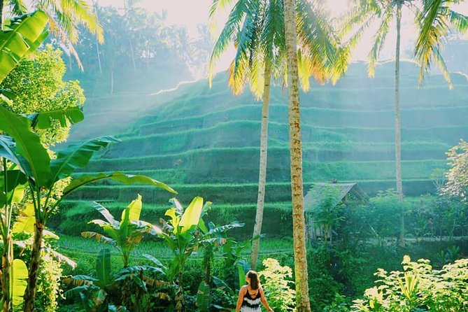 Ubud Tours Package