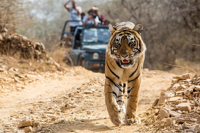 From Jaipur: Ranthambore Tiger Safari Private Day Tour