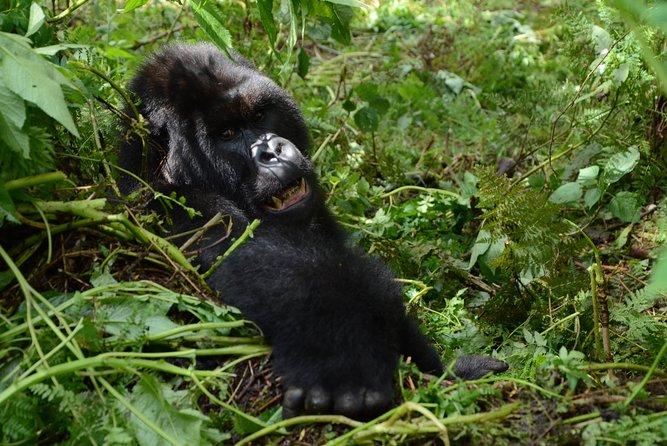 7 Magical Days in Rwanda Tour