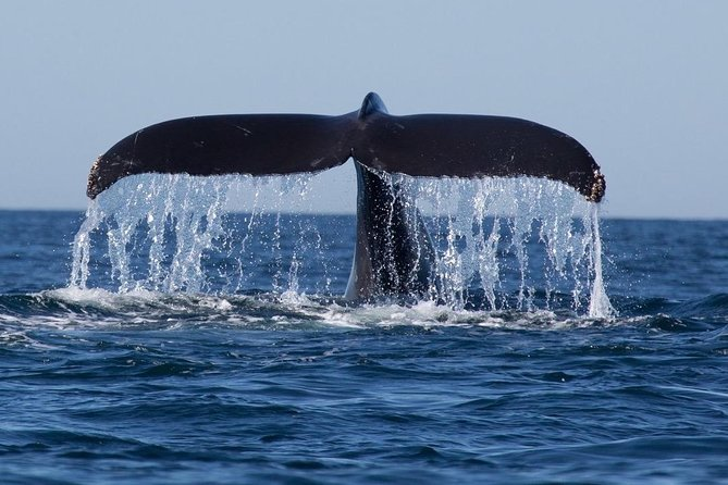 Whales and Dolphins Watching Tour Trincomalee photo 3