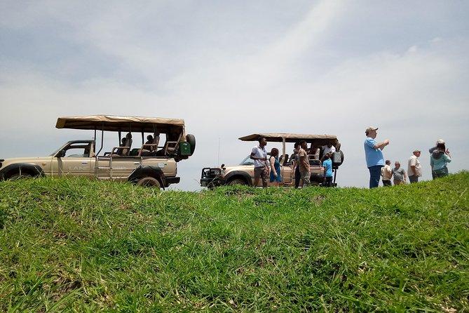 2 Days 1 Night Mikumi National Park from Dar es salaam(LUXURY SAFARI)