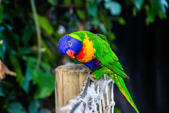 Dine with Parrots photo 3