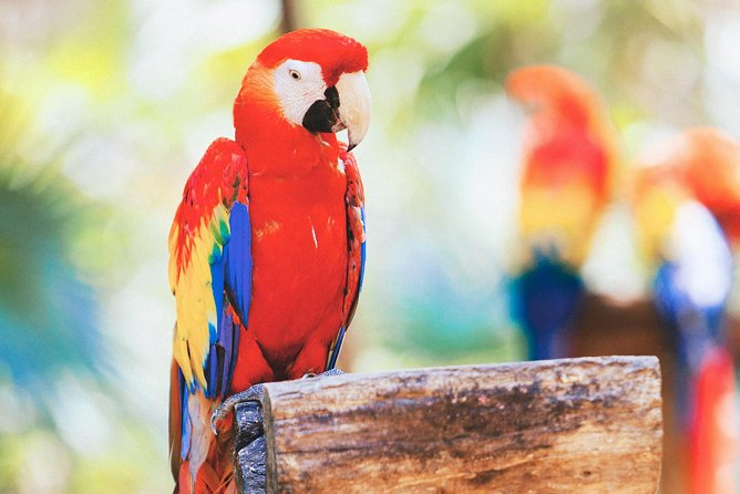 Dine with Parrots photo 6