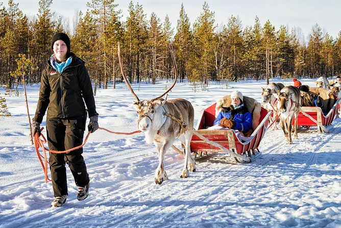 Rovaniemi Reindeer Farm visit and Safari