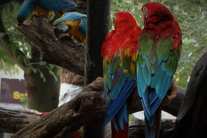 Dine with Parrots photo 4